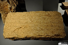 Paikuli Inscription (Sumer and Akkad!) Tags: iraq sassanid sulaimaniya sassanianperiod narseh paikuli paikuliinscription paikulitower sulaimaniyamuseum warhamiii