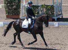 161023_Aust_D_Champs_Sun_Med_4.3_6586.jpg (FranzVenhaus) Tags: athletes dressage australia siec equestrian riders horses performance event competition nsw sydney aus