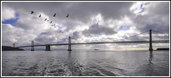 Oakland Bay (Jim the Joker) Tags: oaklandbaybridge pelican pacificocean sanfrancisco water clouds