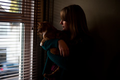 Day 228, Year 9. (evilibby) Tags: 365 3659 365days 365days9 libby barnabee cat gingercat window profile lookingoutthewindow lookingout lookingoutside shadows dark blinds whiskers