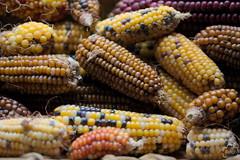 Maz (Plemus) Tags: maz corn criollo colores granos cereal bodegn