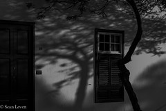 Tree (Sean Levett) Tags: shadows tree yaiza bnw blackandwhite shadowplay lanzarote