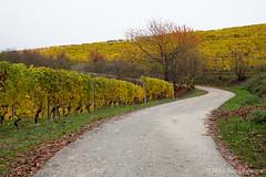 Le Langhe (beppeverge) Tags: barolo beppeverge colline dolcetto grapes italy landscape langhe moscato paesaggio roero uva vigna vigneti vineyard vino vitigni wine localitàverna piemonte italia it