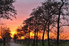 orange-sunset (Don Pedro de Carrion de los Condes !) Tags: donpedro d700 dutch nijkerk zonlicht zons zonsondergang bomen trees sunset silhouettes s avond savonds licht afscheid orange nijkerkerweg