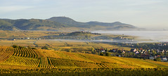 Mist over Alsace (Rich3012) Tags: alsace france landscape vineyards panorama hills balons de vogues mist morning autumn fall
