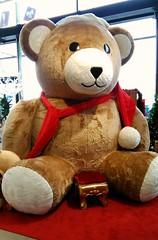 Nounours géant (Doonia31) Tags: ours peluche noël décoration fêtes tapis rouge marron blanc museau oreilles siège géant immense