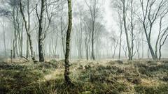 Murk (Dave Fieldhouse Photography) Tags: mistytreeshots mist fog foggy derbyshire derbyshirelife december surpriseview peakdistrict nationalpark trees silverbirch birch atmosphere damp morning dull winter fuji fujixt2 fujifilm 169 landscape outdoors countryside landscapephotography