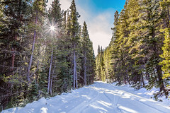 Last Chance (Striking Photography by Bo Insogna) Tags: backcountry wilderness naturelandscapes colorado highcountry snow winter snowy pinetrees jamesinsogna outdoors climate travel hdr