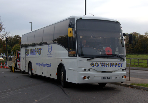 cambs - whippet wc203 huntingdon 03-11-16 JL