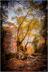 Deep in the Forest (mad_ruth) Tags: forest lesvos tree topazimpression autumn orange leaves pentax k1 tokina 2035mm