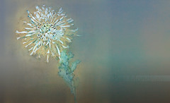 FloresPietMondrian_008 (Visualística) Tags: flores pietmondrian mondrian arte art interpretaciones abstracción paráfrasis versiones análisis flowers flower flor vegetal