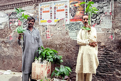 Men selling plants in Walled City of Lahore, Pakistan (travelingmipo) Tags: travel photo film pakistan     pakistani lahore   people walledcityoflahore oldcity   street alley bazaar