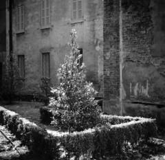 Mantova (str.ainer) Tags: mantova mantua piazzalegalombarda tree wall park agfa isolette ilford fp4 multigradeclassicfb moersch tanol baum wand mauer