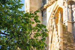 D11453 (davidnaylor83) Tags: acer flickrpublic lönn york yorkminster church kyrka kyrktorn steeple tree träd unitedkingdom gb