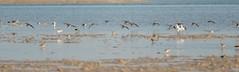 Bird (BobHartmannPhotography) Tags: marcoisland landscape nature bobhartmannphotography bobhartmanncom 365 wildlife 1365 bobhartmann bbobhartmann bird everglades birds wwwbobhartmanncom tigertailbeach fl usa