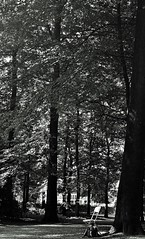 in the forest . (mmmmarta93) Tags: bn blackandwhite bosque silla monocromático sonsbe sonsbeek sitdown chair