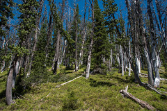 Forest - Avalanche Peak - Yellowstone National Park - Wyoming - 23 June 2016 (goatlockerguns) Tags: avalanche peak yellowstone national park wyoming mountains mountain nature natural nationalpark yellowstonenationalpark snow alpine forest trees west western usa unitedstatesofamerica teton trail view wilderness
