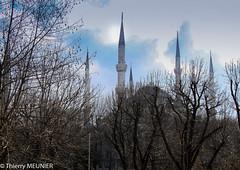 Blue mosque (thierry_meunier) Tags: istanbul turkey turquie arbre architecture blue mosque mosquée paysage tour tower travel tree voyage