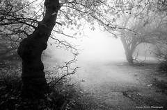 (Giorgos-S) Tags: mist blackandwhite fuji x100 parnitha