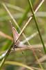 Azuré commun - Argus bleu (CCphoto12) Tags: argusbleu azurécommun insecte letreuil lépidoptère nature papillon