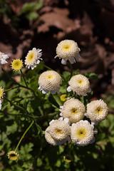 December Bloomers (Jay:Dee) Tags: topw toronto photo walk flower