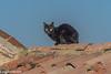 casa mia (conteluigi66) Tags: gatto nero gattonero cat tetto tegola felino luigiconte guardare d500 nikon