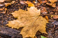 MyagkovS-190.jpg (stasmyagkov) Tags:      day autumn yellow nature park troparevo russia moscow