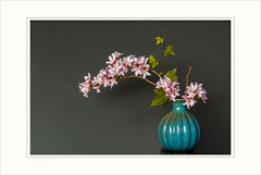 Graceful (Krasne oci) Tags: stilllife vase flowers pinkflowers flowerart elegant graceful photographicart evabartos classic