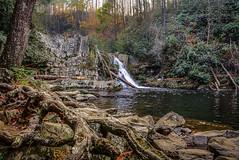 Abrams Falls (Aliparis) Tags: purple nikon nature naturallight waterfall nationalpark tennessee hike rocks roots abramsfalls