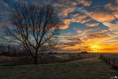 Winter morning light (BraCom (Bram)) Tags: bracom cloud wolk tree boom silhouet silhouette fence hek clouds wolken windmil windmolen windturbine nieuwetonge battenoord cold koud frost vorst rijp ripe sunrise zonsopkomst farm boerderij goereeoverflakkee zuidholland nederland southholland netherlands holland canoneos5dmkiii widescreen canon 169 canonef24105mm bramvanbroekhoven nl