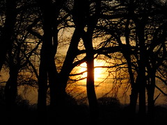 """ Its in the trees...Its coming ? "" (hope2029) Tags: golden sunset trees silhouette leeds west yorkshire"