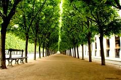 Royal lane (Yolanda Miel) Tags: paris france bench louvre path lane palaisroyal alle conseildtat conseilconstitutionnel ministredelaculture canon70d yolandamiel