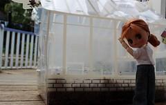 Come and have a look... (kit_kaht - Kat) Tags: gardening megan greenhouse woolworths jamieoliver petiteblythe watchitgrow jamiesgarden lpspetite obitsu11cm blytheonobitsu jamiesgardencress progressdiary