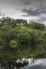 Tarum (Ramesh_Thadani) Tags: brazil rio brasil river am amazon bresil brasilien jungle fluss manaus floresta mata brasile amazonas taruma urwald amazonie djungel tropicalrainforest alagado varzea amazonjungle florestaamazonica florestatropical amazonien tropicaljungle amazzonie tarumariver riotaruma