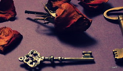 (absolutelyultimate) Tags: flowers roses stilllife color fall canon keys rebel petals shadows decay edited dried t3
