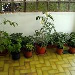 backporch-tomatos thumbnail