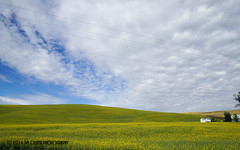 Scale (jimoliverphotography) Tags: blue sky white green yellow buildings out countryside washington open pacific wide 4th july shades farmland hills pullman daytime crops southeast rolling contours sense palouse 2014 louds nothwest