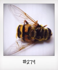 "#DailyPolaroid of 4-7-14 #279 • <a style=""font-size:0.8em;"" href=""http://www.flickr.com/photos/47939785@N05/14681542734/"" target=""_blank"">View on Flickr</a>"