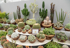 Hampton Court Palace Flower Show (alh1) Tags: england london cacti display goldmedal hamptoncourt rhs royalhorticulturalsociety floralmarquee hamptoncourtflowershow2014
