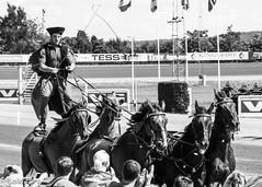 _MG_0155.jpg (Laila F.) Tags: horse oslo norway trav bjerke oslograndprix hestesport panonering