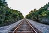 Westchase Railroad Tracks (dbubis) Tags: railroad trees tampa florida tracks fl bubis westchase dbphoto nex6