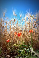 i marrons (.carleS) Tags: canon cereals provena 60d caeduiker