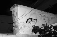 IMGP3669-stavrosstam (stavrosstam) Tags: street bw wall night cat jump thecatwhoturnedonandoff littledoglaughednoiretblancet