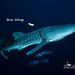 """Whale shark """"Strapless"""" • <a style=""""font-size:0.8em;"""" href=""""http://www.flickr.com/photos/77307500@N08/15009656557/"""" target=""""_blank"""">View on Flickr</a>"""