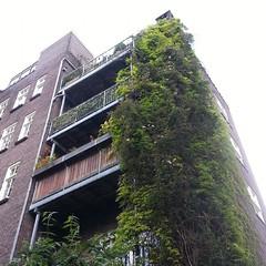 overgrown #konijnenstraat #amsterdam (milov) Tags: building overgrown amsterdam phonecam square balcony lookingup balconies cropped tweetme konijnenstraat fbme instagram samsunggalaxys3