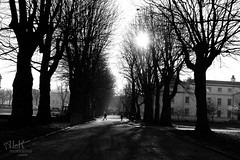 (ALK Photography) Tags: life road autumn trees winter blackandwhite bw sun sunlight cold london love college nature beautiful beauty sunshine walking happy photography hope landscapes amazing nikon university pretty natural emotion wind personal path greenwich calm chilly positive emotional pathway noleaves blackandwhitephotography naturallighting sunshining landscapephotography prosperous beautifullandscapes sunlightthroughthetrees alkphotography