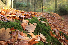 Herbst (Samsi1701) Tags: laub herbst wald moos
