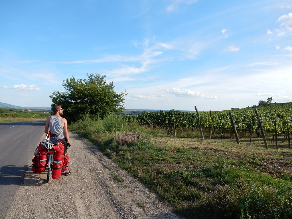 Cycling through the vineyards