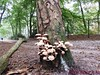 """Baarn                13-09-2014        40 Km   (25) • <a style=""""font-size:0.8em;"""" href=""""http://www.flickr.com/photos/118469228@N03/15058817359/"""" target=""""_blank"""">View on Flickr</a>"""