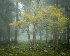 Les premiers signes de l'automne (Tonton Dave) Tags: tree nature forest switzerland suisse jura arbre neuchatel forêt